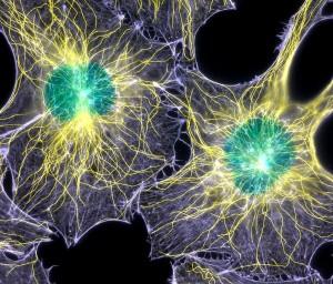 Регенерация, регенеративные технологии в стоматологии в москве, стволовые клетки
